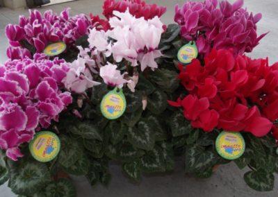 floricolturapaulitti2