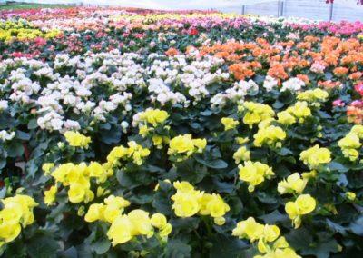 floricolturapaulitti30
