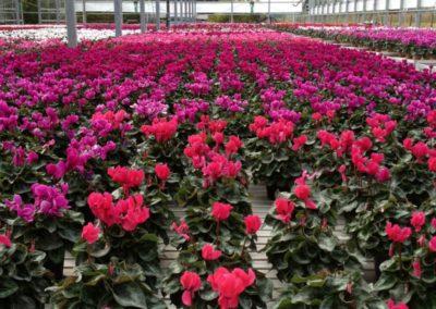 floricolturapaulitti9